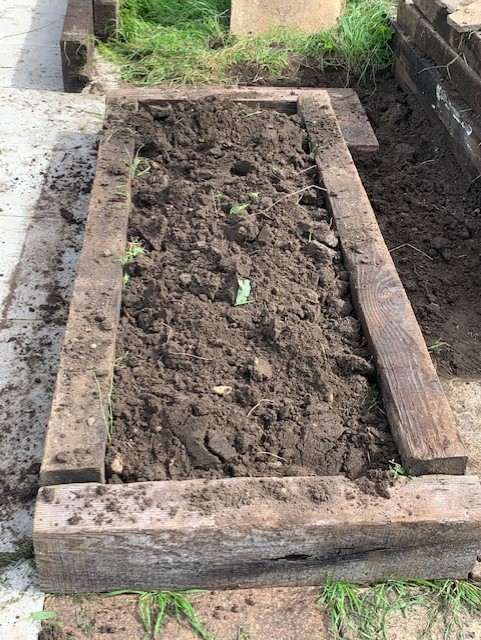 the allotment now, raised empty bed